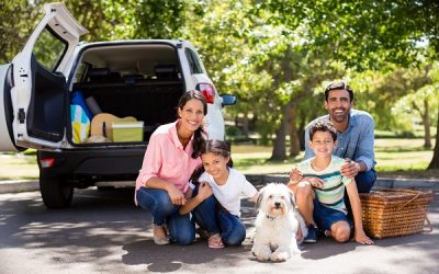 Will Auto Insurance Cover Your Pet's Injuries If It's in the Vehicle?